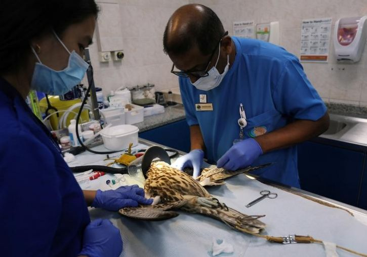 worlds largest falcon hospital