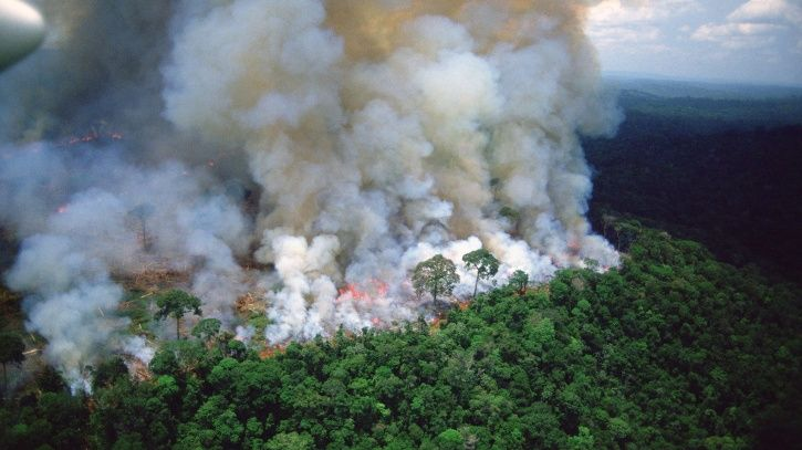 Amazon rainforest fire: Leonardo DiCaprios, Anushka Sharma and other celebs comment.