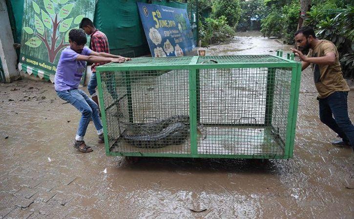 Gujarat Flood