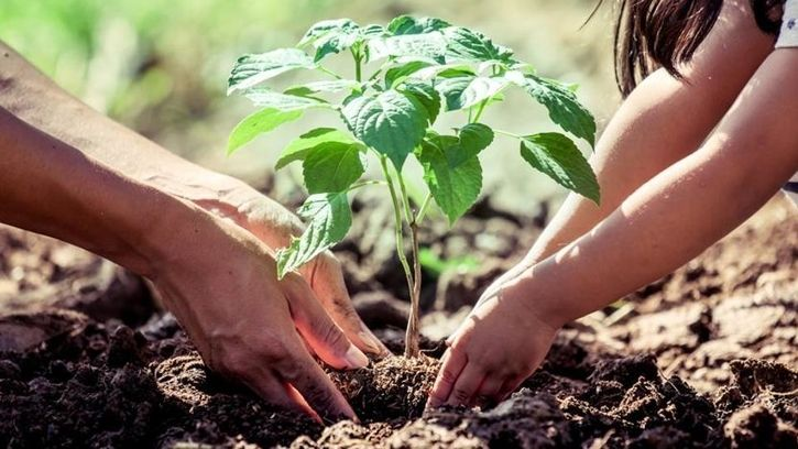 planting more trees