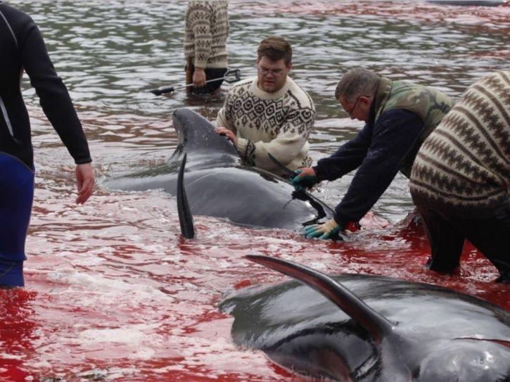 Whales Killing