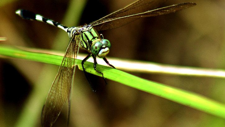 All Insects Will Be Extinct Within 100 Years, Due To Heavy Use Of Pesticide & Human Activity