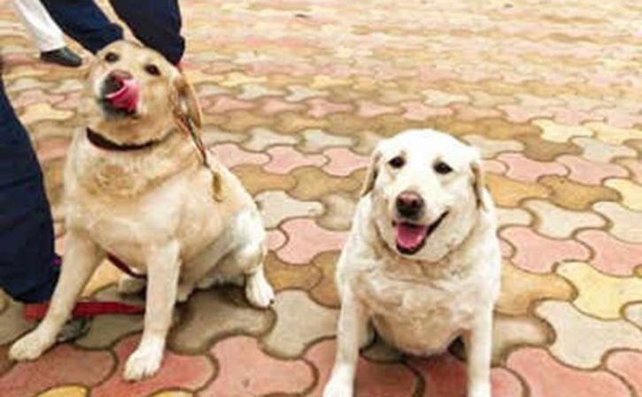 Babu and Babe