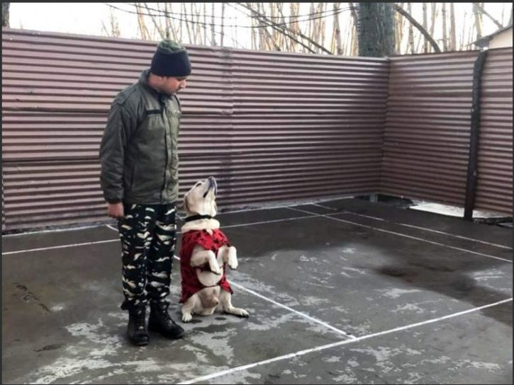 CRPF sniffer dogs, Laila, Cody, Roger, Improvised Explosive Devices, terror attack