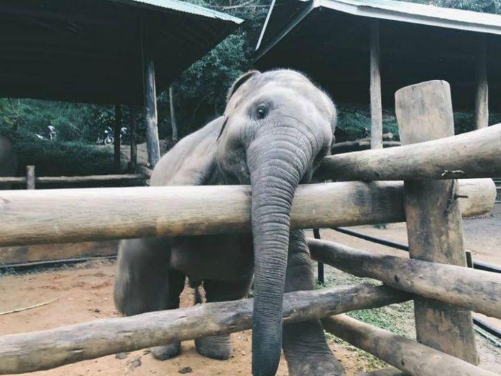 elephant, baby elephant, elephant caretaker, cute baby elephant, elephant wants a hug