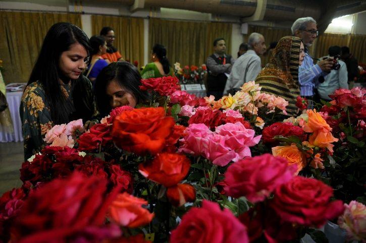 Rose production, revenue, valentine