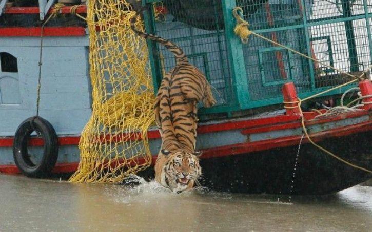 Tiger reserve Sundarbans