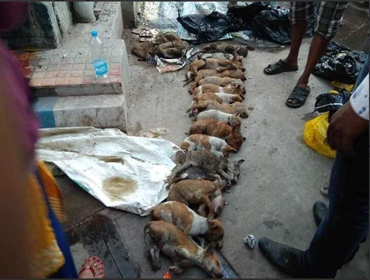 16 puppies, Kolkata, N R S Medical College, video clip, CCTV Footage