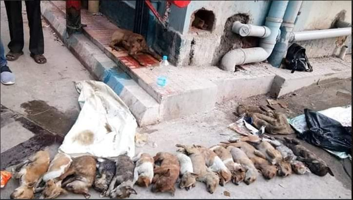 16 puppies, nursing students, NRS Medical college, arrested, police officials, animal cruelty