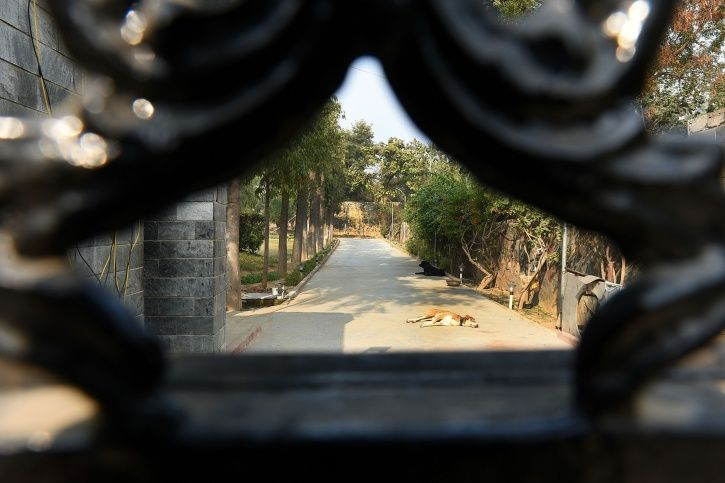 Delhi Farmhouse Firing