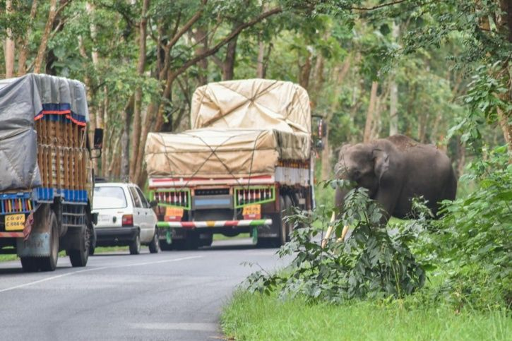 Elevated Corridor In Bandipur National Park