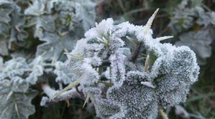 Munnar snow