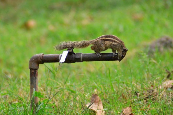 Sewage Water Recycling