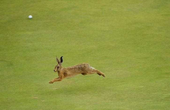 animals interrupt sports12