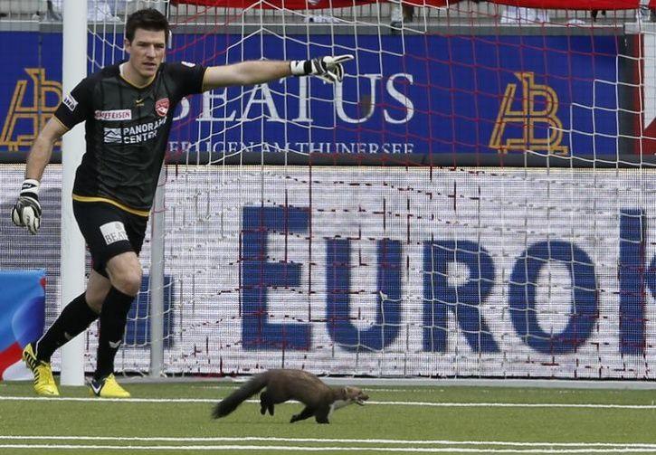 animals interrupt sports13