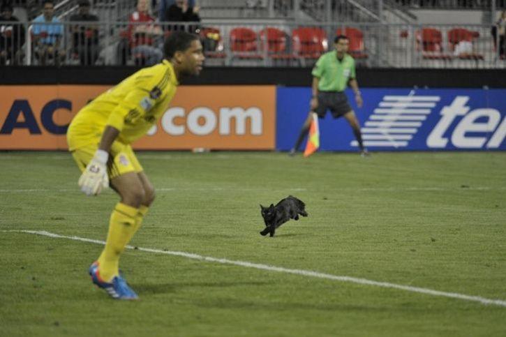 animals interrupt sports17
