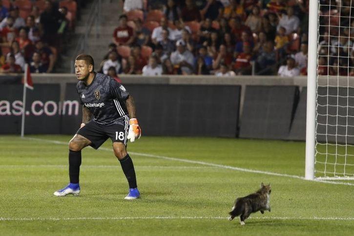 animals interrupt sports19