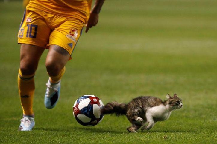 animals interrupt sports1