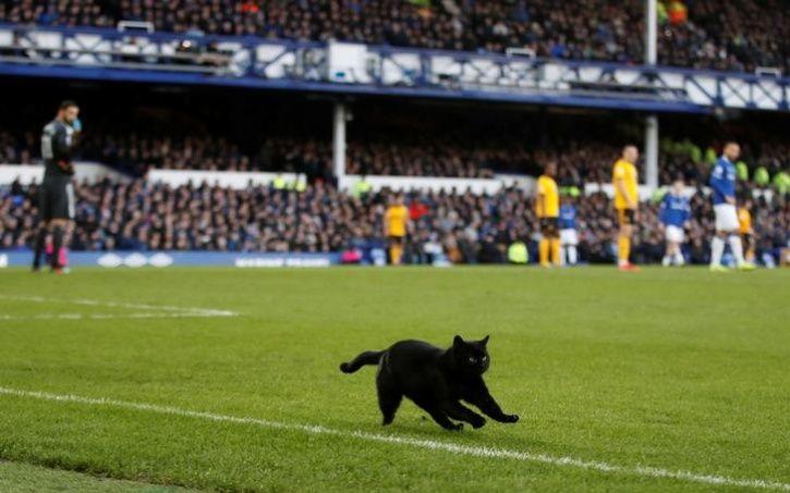 animals interrupt sports20