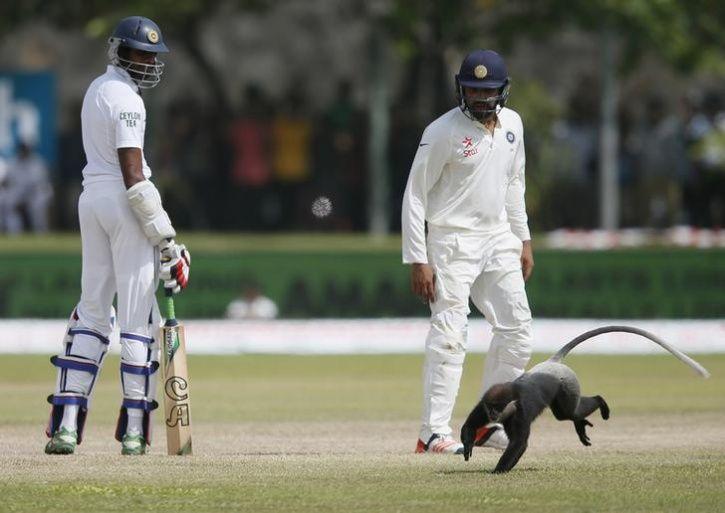 animals interrupt sports2