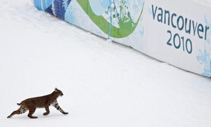 animals interrupt sports8