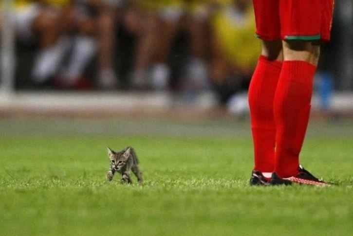 animals interrupt sports9