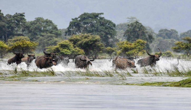 Assam Floods Kaziranga