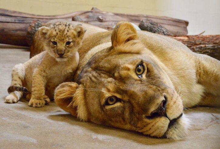 Bahati Cub
