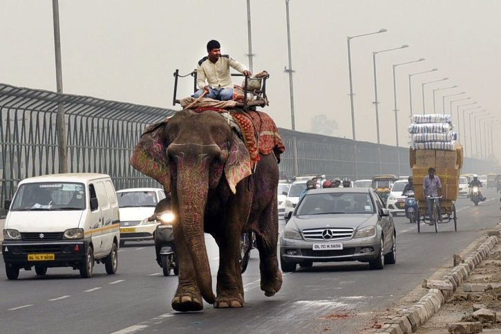 Delhi Elephant