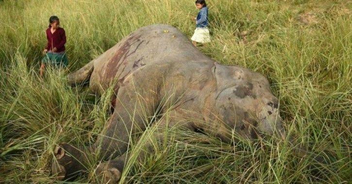 elephants died