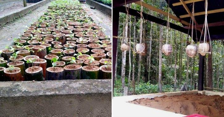 sapling in bamboo pot