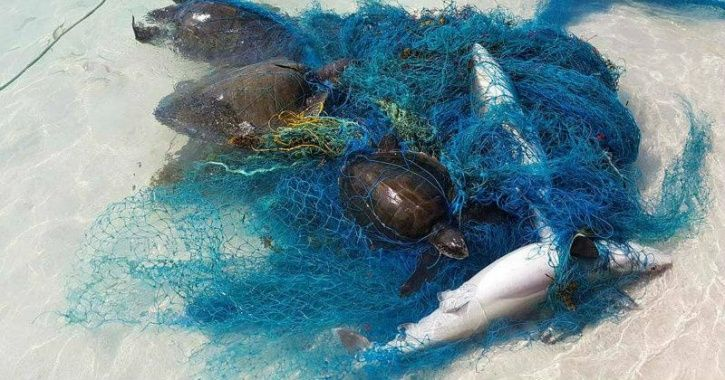 shark plastic, great white shark, plastic sea creatures, plastic turtle, marine life plastic, plasti
