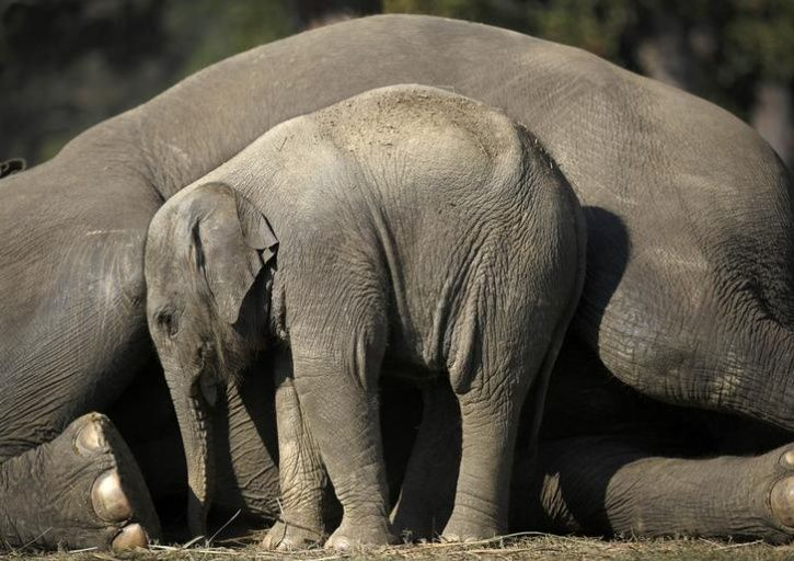Animal Mothers And Babies14