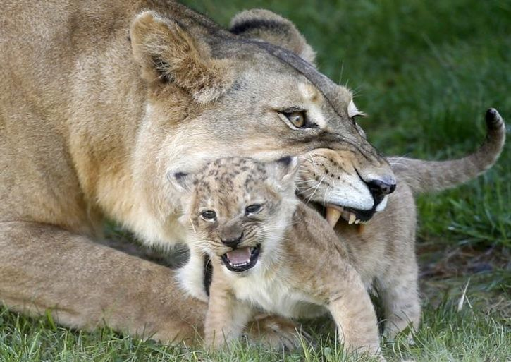 Animal Mothers And Babies15