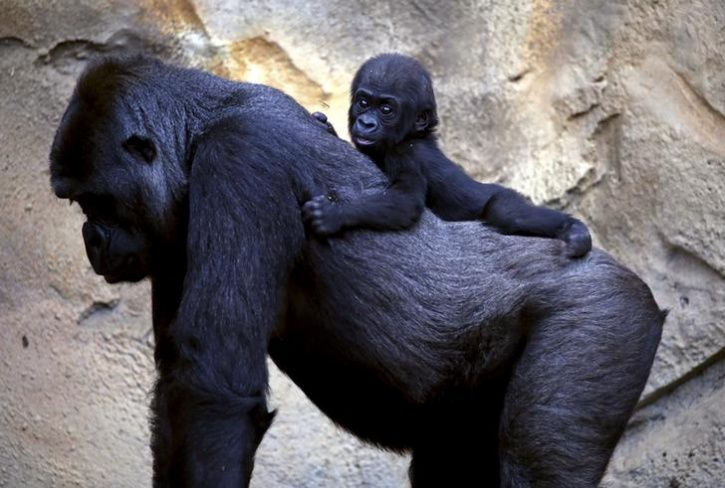 Animal Mothers And Babies1
