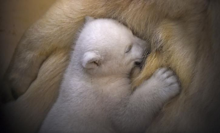 Animal Mothers And Babies4