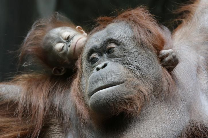 Animal Mothers And Babies5