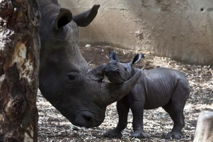 Animal Mothers And Babies8