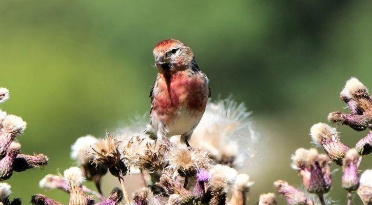 bird smuggle