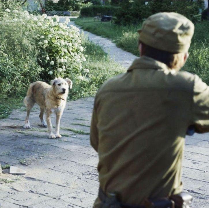 Dogs of Chernobyl.