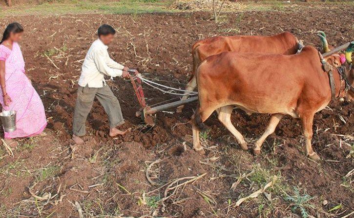 farmer widow get land rights transferred