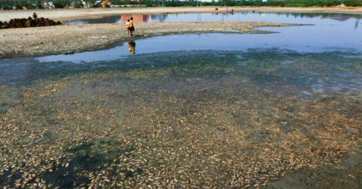 Locals Clear Tonnes Of Dead Fish In Chennai Lake After Authorities Shrugged Off Responsibility