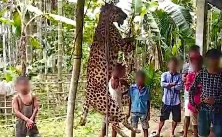 Villagers In Assam Kill Leopard