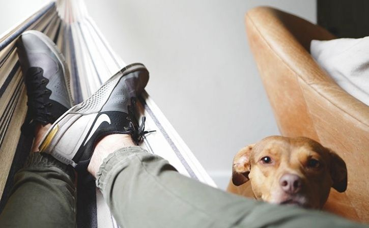 Chemical Pollutants In Home Degrade Fertility In Men And Dogs