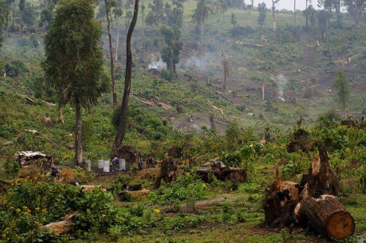 Deforestation Congo