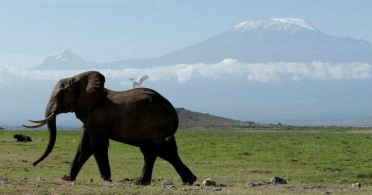elephant migration ai analysis