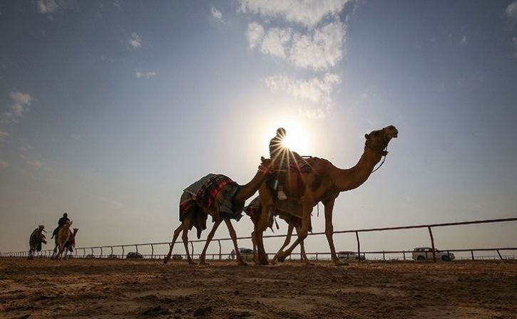 gujarat cop dies of heart attack depressed camel gives up food