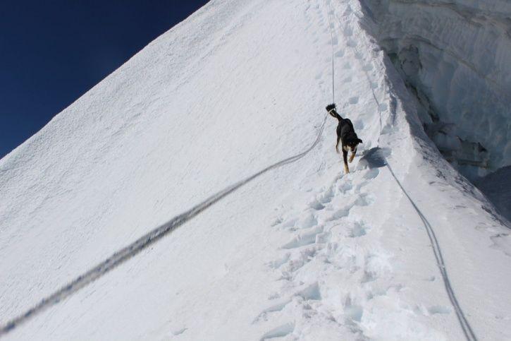 Nepalese dog, expedition, Baruntse peak, Sherpas, Don Wargowsky. Seattle