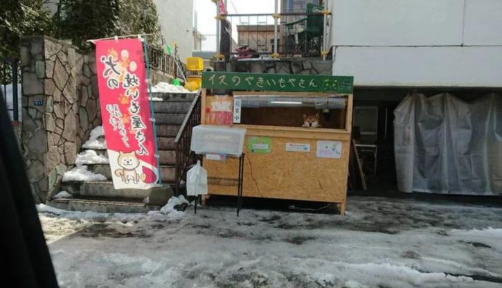Shiba Inu runs sweet potato shop