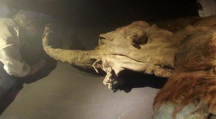 Yuka woolly mammoth